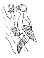 coloring-pages-Woodpeckers-6