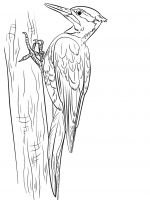 coloring-pages-Woodpeckers-7