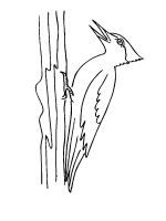 coloring-pages-Woodpeckers-9