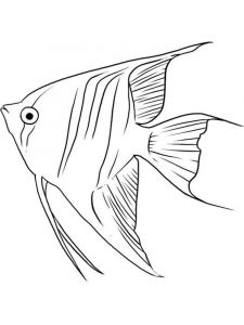 Angelfish-coloring pages-10