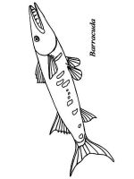 Barracudas-coloring pages-4