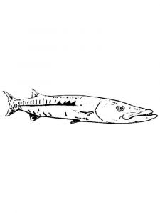 Barracudas-coloring pages-7
