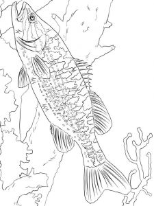 Basses-coloring pages-4