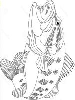 Bass fish coloring pages. Download and print Bass fish ...