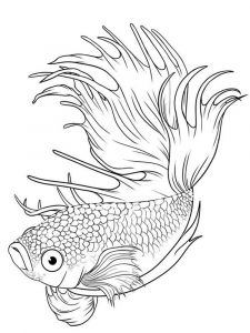 Betta-fish-coloring pages-2
