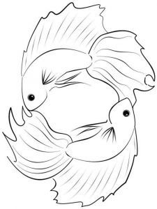 Betta-fish-coloring pages-3