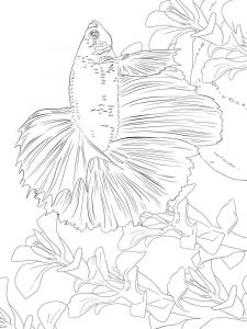Betta-fish-coloring pages-6