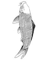 Carp-coloring pages-1
