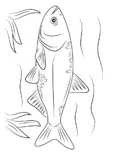 Carp-coloring pages-2
