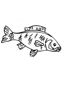 Carp-coloring pages-4