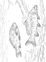 Carp-coloring pages-7