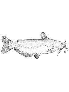 Catfish-coloring pages-15