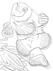 Clownfish-coloring pages-4