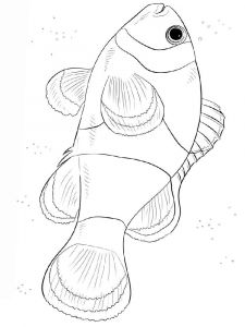 Clownfish-coloring pages-6