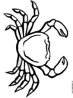 Crab-coloring-pages-10