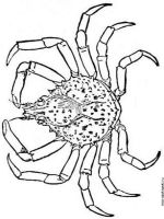 Crab-coloring-pages-12