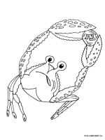 Crab-coloring-pages-13