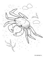Crab-coloring-pages-6