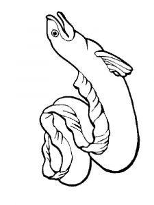 Eels-coloring pages-1