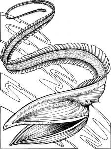 Eels-coloring pages-10