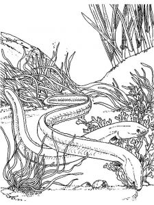 Eels-coloring pages-6