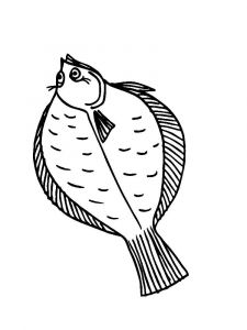Flounders-coloring pages-1