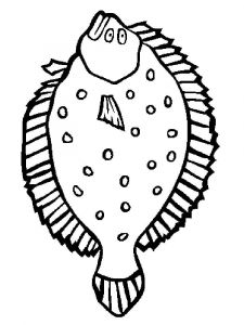Flounders-coloring pages-3