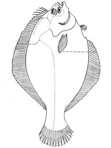 Flounders-coloring pages-4