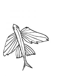 Flying-fish-coloring pages-1
