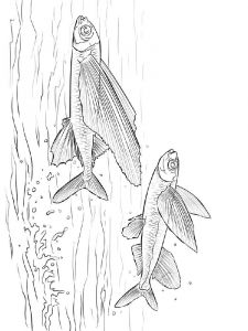 Flying-fish-coloring pages-11