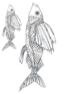 Flying-fish-coloring pages-3
