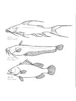 Freshwater-Fish-coloring-pages-12