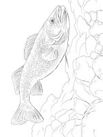 Freshwater-Fish-coloring-pages-13