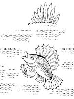 Freshwater-Fish-coloring-pages-14