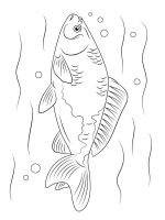 Freshwater-Fish-coloring-pages-5