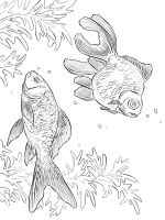 Goldfishes-coloring pages-4