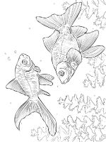 Goldfishes-coloring pages-5