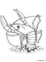 Hermit-Crab-coloring-pages-14