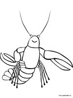 Hermit-Crab-coloring-pages-8