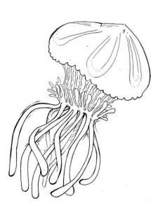 Jellyfish-coloring pages-3