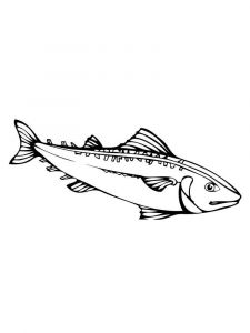 Mackerels-coloring pages-3