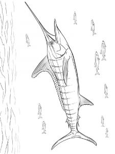 Marlin-coloring pages-8