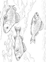 Perch-coloring pages-1