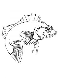 Perch-coloring pages-3