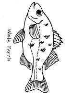 Perch-coloring pages-4