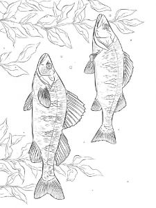 Perch-coloring pages-5