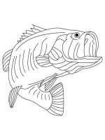 Perch-coloring-pages-10