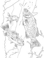 Perch-coloring-pages-11