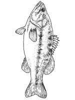 Perch-coloring-pages-12