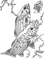 Perch-coloring-pages-3